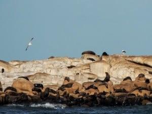 A ilha dos lobos marinhos