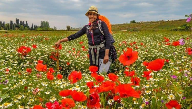 Caminho de Santiago - Campos de flores