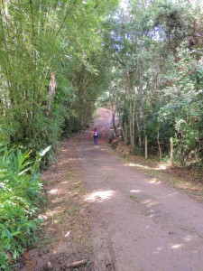 trilha-ratones-costa-da-lagoa-3