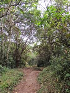trilha-ratones-costa-da-lagoa-4